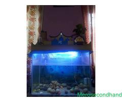 Aquarium on sale at kathmandu