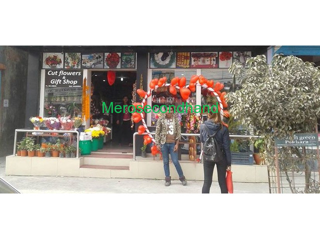 Aquarium / Cut Flowers/ Flower plants / Gift shop on sale at pokhara nepal - 1/4