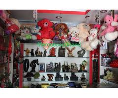 Aquarium / Cut Flowers/ Flower plants / Gift shop on sale at pokhara nepal - Image 3/4