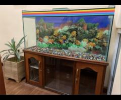 Aquarium with wooden showcase stand