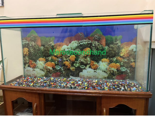 Aquarium with wooden showcase stand - 2/3