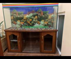 Aquarium with wooden showcase stand - Image 3/3
